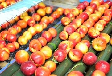 Frutta estiva: i prezzi sono buoni ma solo per i forti cali di produzione