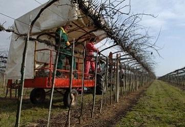 La meccanizzazione in viticoltura: incontro tecnico con Cesare Intrieri
